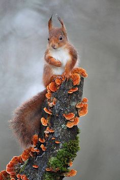 Too cute! I am reconsidering my whole attitude to #Squirrels :)