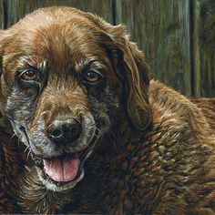 Old Smiling Chocolate Lab, painting