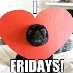 #tgif #pet #dogs #vendredi #weekend #chien #humour #zoomalia #animalerie www.zoomalia.com