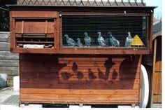 "Page 10 -- ""Racing Pigeon Lofts"" Racing Pigeon Lofts, Kitchen Sink Storage, Pigeon House, Homing Pigeons, Palomar, Coop Plans, Bird Cages, Loft Design, Animal House"