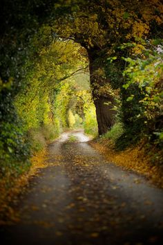 Autumn lane, Wickham Bishops, Essex, England - by Stuart Miller. Country Walk, Country Roads, Country Living, Foto Nature, Essex England, Tree Tunnel, English Countryside, Essex Countryside, Pathways