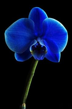 I really love blue orchids!