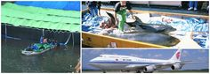 Sign WDC's petition now - stop airlines transporting dolphins captured in the hunt.