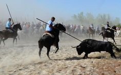 'Historic' victory for animal rights as Spanish region bans bull-spearing festival