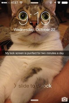 Cat Memes Of The Day 30 Pics – - Love.,Funny, Funny Categories Fuunyy Cat Memes Of The Day 30 Pics – - Lovely Animals World Source by lovelyanimalsworld. Funny Animal Jokes, Really Funny Memes, Funny Animal Pictures, Cute Funny Animals, Stupid Funny Memes, Cute Baby Animals, Funny Cute, Cute Cats, Funniest Animals