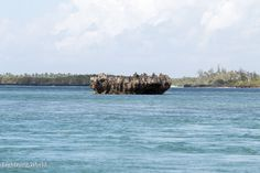 Reisebericht Afrika Kenia Nordküste Watamu