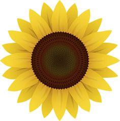 해바라기 벡터 이미지입니다.   sunflower vector image