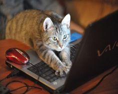 You weren't pricing cat food on line when you were too busy to play with me. You were PINNING!