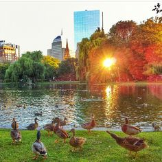 Even the ducks love these late summer sunsets!