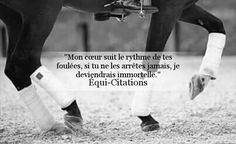 - Art Of Equitation Good Quotes For Instagram, Friesian Horse, Horse Quotes, French Quotes, Pinterest Photos, Horse Photography, Horse Love, Wild Horses, Horse Riding