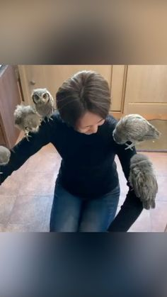 Cute Little Animals, Cute Funny Animals, Funny Cute, Animal Jokes, My Animal, Beautiful Owl, Animals Beautiful, Owl Gifs, Fancy Chickens