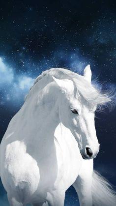 White horse wallpaper by georgekev - fe - Free on ZEDGE™ Cute Horses, Pretty Horses, Horse Love, Most Beautiful Horses, Animals Beautiful, Cute Animals, Horse Wallpaper, Animal Wallpaper, Food Wallpaper