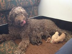 My fabulous baby with her babies