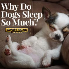 Does your dog spend a good deal of the day with his head on a pillow? Thought so. While it may seem excessive, sleeping for long periods is a natural part of the canine lifestyle. Dogs tend to spend 50 percent of the day snoozing, 30 percent awake but lying around, and 20 percent being...