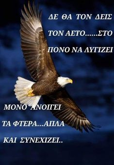 Good To Know, Bald Eagle, Wise Words, Positive Quotes, Inspirational Quotes, Pictures, Crete, Philosophy, Truths