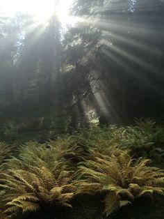 Märchenwald...