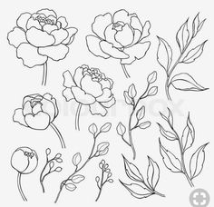 Flower Drawing Peony flower and leaves line drawing. Simple botanical peonies, branch and berry countur. Great for tattoo, invitations, greeting cards, decor Flower Line Drawings, Botanical Line Drawing, Line Flower, Flower Sketches, Outline Drawings, Botanical Drawings, Peony Flower, Flower Art, Tattoo Drawings