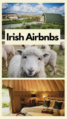 Planning a staycation in Ireland and looking for the best Irish Airbnbs close to the beach or the gorgeous Irish coastline? These are our top pics for cool places to stay in Ireland by the beach - all with availability this summer! Places To Stay In Ireland, Greece Rhodes, Ireland Travel Guide, Top Pic, Krakow Poland, Responsible Travel, Animal Activities, Beautiful Places To Visit, Sardinia