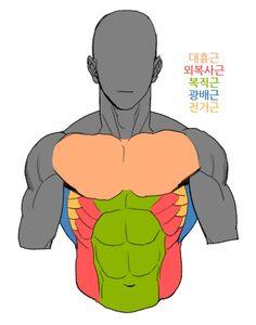 """봉춘식ꈍꈊꈍ on Twitter: """"전거근 튜토리얼임니다 근육 명칭 몇개 모르는데 이거만든다고 한참 찾아봤네..ㅠㅠ그래도 잘 모르겠다(멍청)… """"  Más en: www.sonnivasquez.com"""