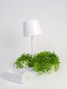 Plant Lamp by Mikko Laakkonen Finland Nordic Design, Scandinavian Design, Amazing Architecture, Interior Architecture, Green Lamp, Eclectic Decor, Clean Design, Love And Light, Finland