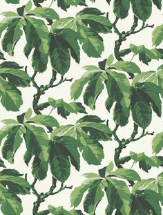 fig leaf tree wallpaper pattern // Boråstapeter Oxford (1222)