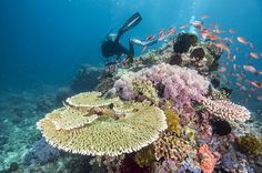 Acidification of the Barrier Reef.