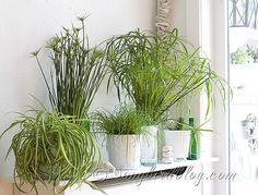 green plants mantel decoration at Songbirdblog