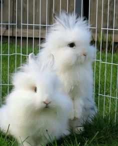 Are they for real? I cannot get over how amazingly adorable these bunnies are!