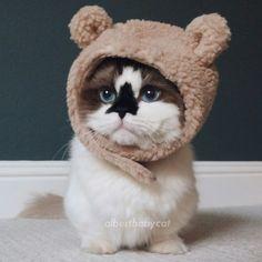 Bear cat!