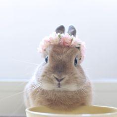 写真撮ってないで、早くご飯入れてくれません? * #ネザーランドドワーフ #うさぎ #ふわもこ部 #ペット #アニマル写真部 #netherlanddwarf #bunny #igersjp #iganimal_snaps #cutepetclub #pet #instapet #instaanimal #weeklyfluff #webstapets