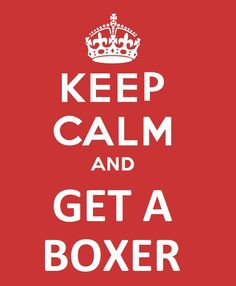 keep calm and get a boxer