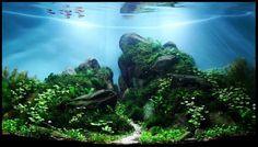 Goat Pass tank : HrAquascape.org - Galerija akvarija: