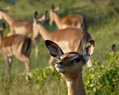 Ranger, Safari, Kangaroo, Animals, Tour Operator, Cape Town, Nature Reserve, Wilderness, Art Gallery