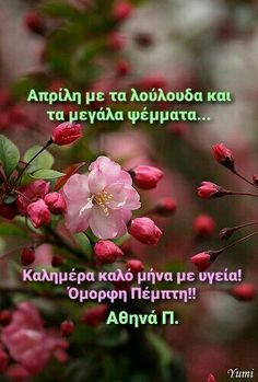 Good Morning Flowers Gif, Good Morning Picture, Morning Pictures, Good Morning Images, Good Morning Quotes, G Morning, Morning Wish, Pretty Flowers, Pink Flowers