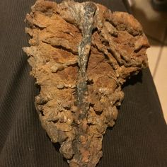 Check this schist out. Found this near Dreamy Draw in the middle of Phoenix. Some deteriorated iron and quartz veining off from the schist looked like a leaf to me so I snatched it up while I was showing a few people the old prospecting holes over there. #minerals #schist #quartz #deteriorating #iron #leaf #pareidolia #collection #sharing #enjoy #spiritual #energy #gold #prospecting #phoenix #arizona #hiking #ryujinunlimited by otohimeunlimitedlapidary