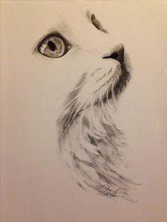 White cat charcoal drawing Like the part to be left blank