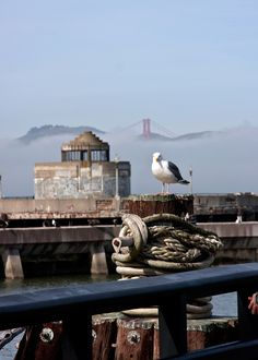 Seagull | Fisherman's Wharf, San Francisco, CA