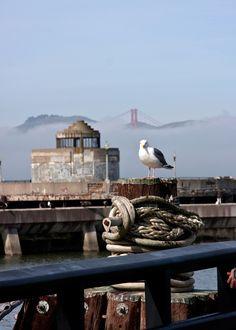 Seagull | Fisherman's Wharf, San Francisco, CA
