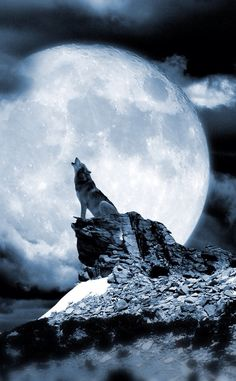 New Tattoo Moon Wolf Black Wolves 38 Ideas Wolf Images, Wolf Photos, Wolf Pictures, Beautiful Wolves, Animals Beautiful, Wolf Cry, Wolf Howling At Moon, Wolf Artwork, Nature Sauvage