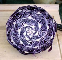 plantas geometricas-7. Repolho fractal