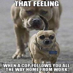 23 Really Funny Dog Memes - Funny Dog Pictures #compartirvideos.es #funnyvideos