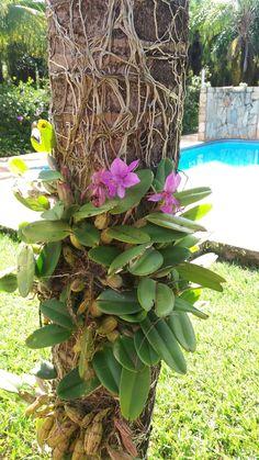 #orquideasemaus