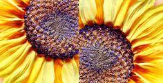Ü 50: ☼ Sonne und Licht - SOLEIL ET LUMIERE - sun and li...
