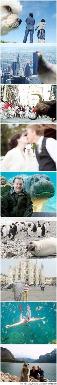 fun image, animal, photobomb