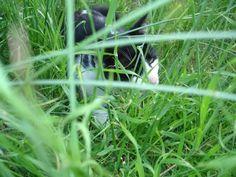 blog di Sara: Forse è ora di tagliare l'erba!