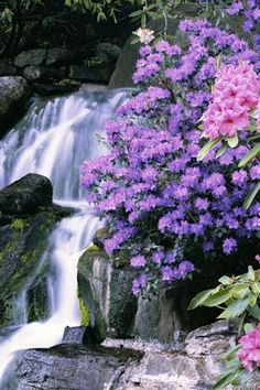Waterfall showing off it's beauty to the stunning flowers adorning it's landscape.