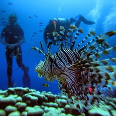 Great Barrier Reef, Australia. This is the reason I got scuba certified.