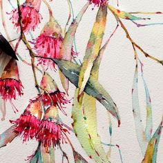 Art suggestion Eucalyptus in watercolor on Behance Australian Wildflowers, Australian Native Flowers, Australian Art, Watercolor Flowers, Watercolor Paintings, Painting & Drawing, Watercolours, Watercolor Pictures, Easy Watercolor