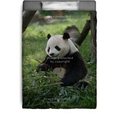 Giant Panda Bedding can be a great addition for a children's room for any little kid that just loves Panda Bears.  See more at http://www.visionbedding.com/giant-panda_bedding-d-608578-190-3026.asp