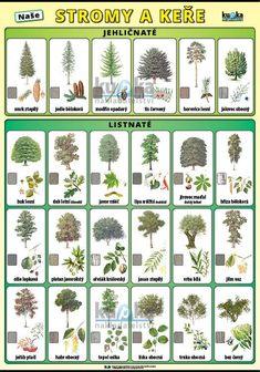 Montessori, Vocabulary, Puzzles, Brain, Education, Learning, School, Plants, Gardens